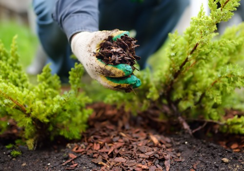 Gardener Mulching as a Part of Professional Landscaping for Washington IL