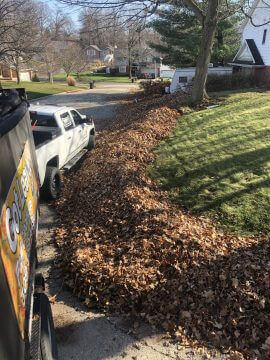 Fall & Spring Cleanup